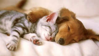 Cat-and-Dog-sleeping-together