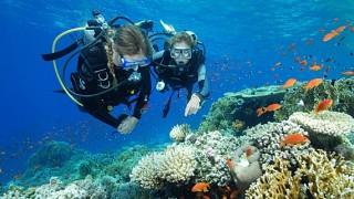 scuba-diver-large